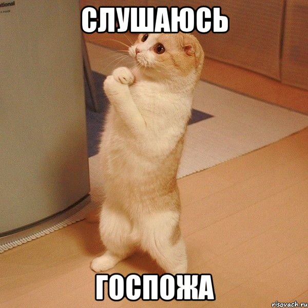 http://risovach.ru/upload/2014/03/mem/kote_44619820_orig_.jpg