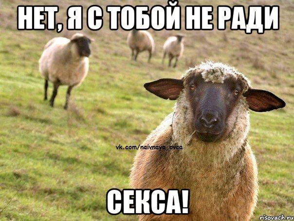 Секс овцой