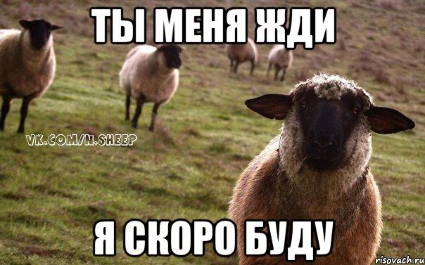 naivnaya-ovca_46704042_orig_.jpeg
