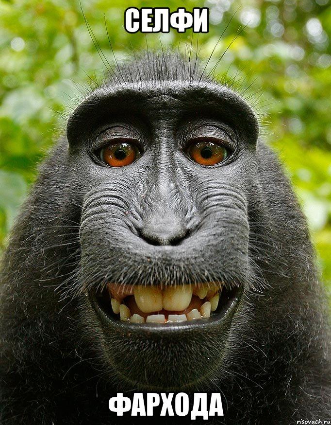 Селфи фархода мем довольная обезьяна