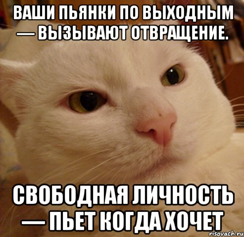 http://risovach.ru/upload/2014/07/mem/derzkij-kote_55164160_orig_.jpg