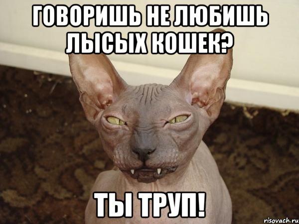 фото лысых кошек