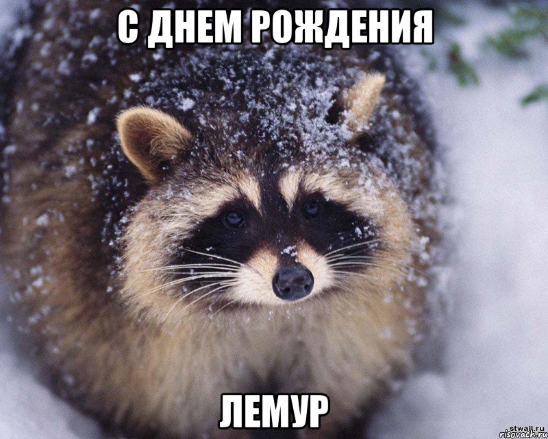 enot_63291865_big_.jpeg