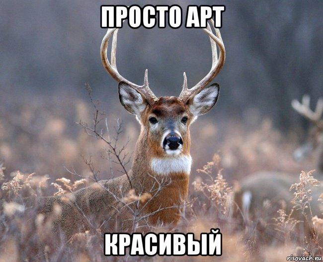 http://risovach.ru/upload/2014/11/mem/naivnyy-olen_66499611_orig_.jpeg