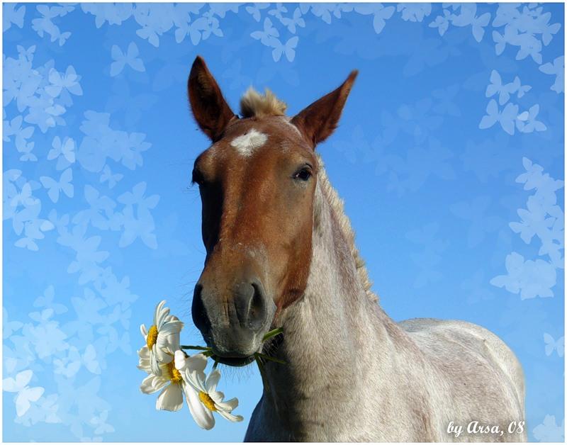 Поздравления с днем рождения мужчине в год лошади