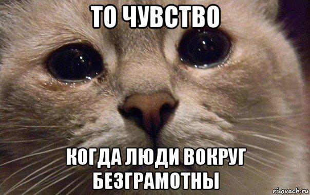 v-mire-grustit-odin-kotik_71411329_orig_