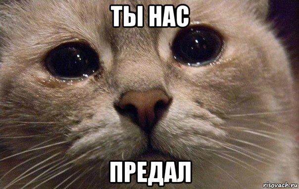 http://risovach.ru/upload/2015/01/mem/v-mire-grustit-odin-kotik_71620516_orig_.jpg