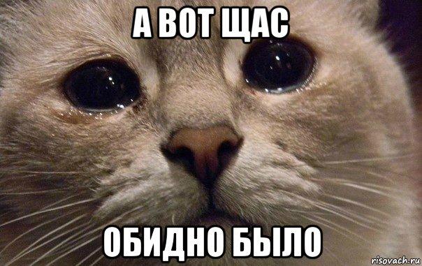 а вот щас обидно было, Мем В мире грустит один котик - Рисовач .Ру