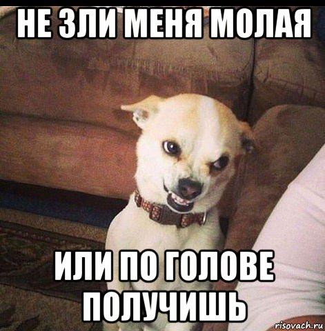 Анекдот: Когда очень злишься, надо отвлечь себя. Вот я…