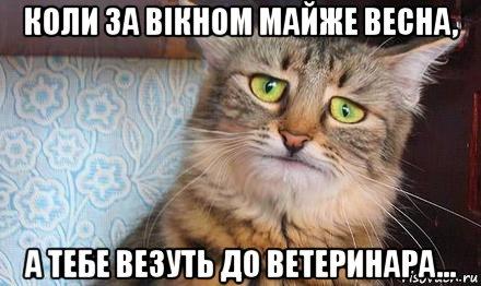 mi oldja fel a vesekövet)