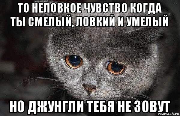 grustnyy-kot_83335418_orig_.jpg