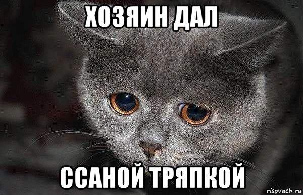 grustnyy-kot_85064131_orig_.jpg