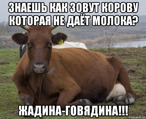 картинки жадина-говядина