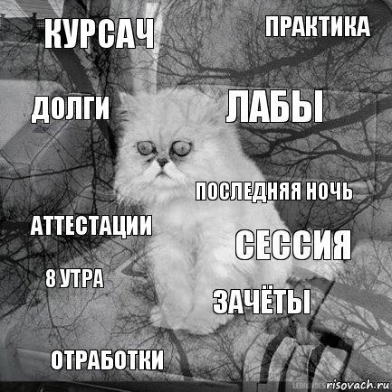 http://risovach.ru/upload/2015/06/mem/kot-bezyshodnost_85744251_orig_.jpg