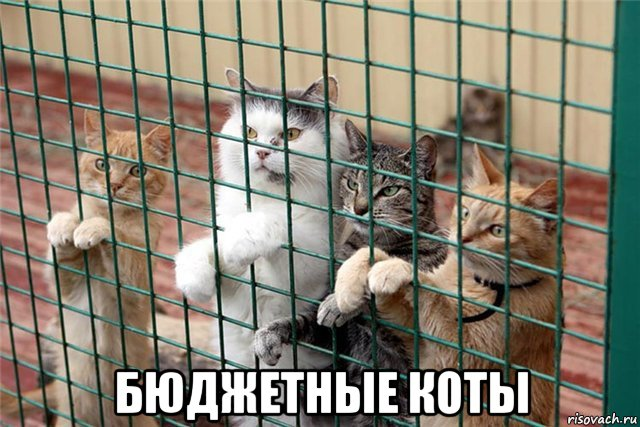 его где в москве есть приюты для кошек тип изделий