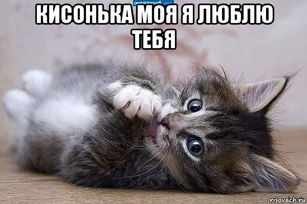 котёнок люблю тебя картинки