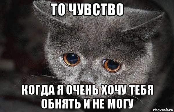 http://risovach.ru/upload/2015/08/mem/grustnyy-kot_90193252_orig_.jpg