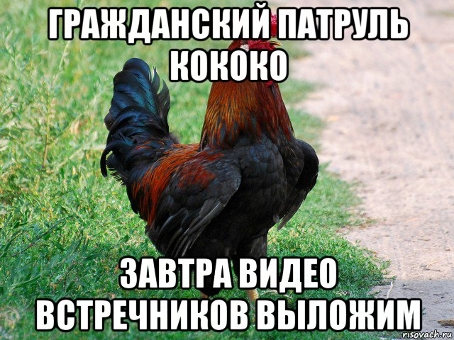 petuh_89041147_orig_.jpg