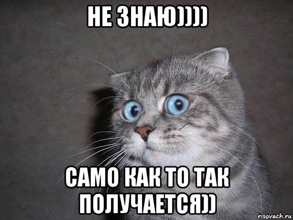 http://risovach.ru/upload/2015/08/mem/udivlyonnyy-kot_91039940_orig_.jpg