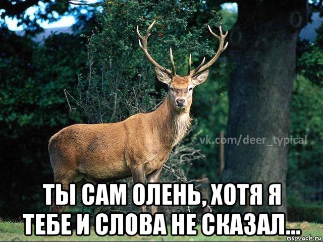 Поздравление от оленя