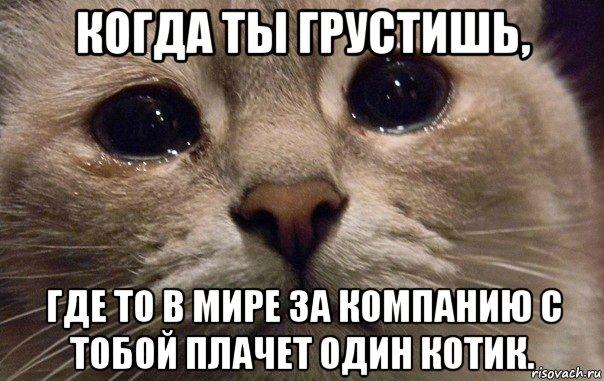 не грусти котик мой любимый картинки