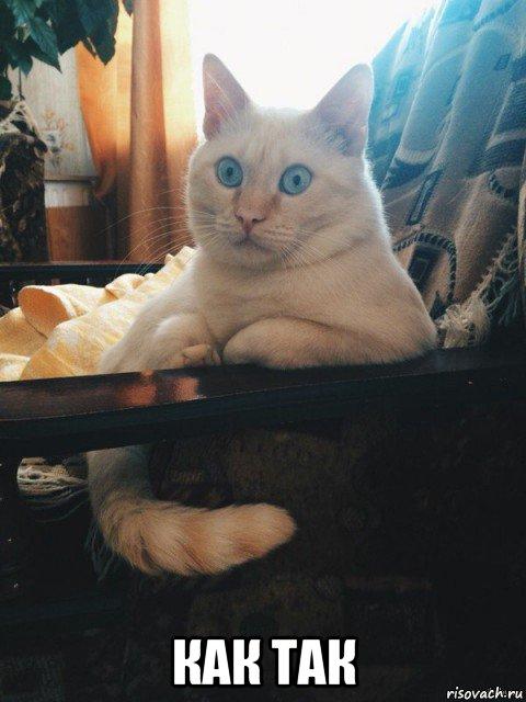 фото кот задумчивый