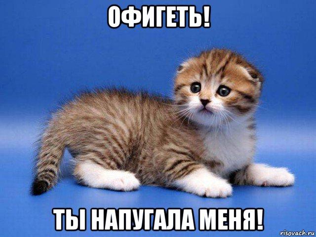 http://risovach.ru/upload/2015/12/mem/kotyonok_101374420_orig_.jpg