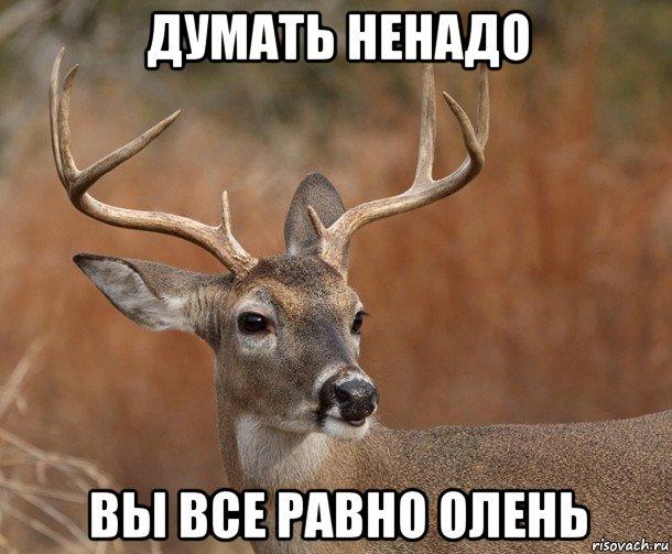 http://risovach.ru/upload/2015/12/mem/naivnyy-olen-v2_101659175_orig_.jpg