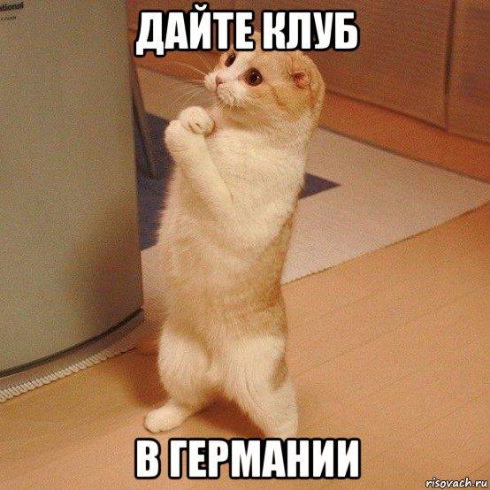 kote_105146459_orig_.jpg
