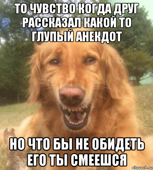 Глупый Анекдот