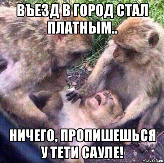 obezyany_111746096_orig_.jpg