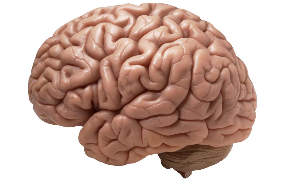 Предсказание будущего при помощи сканирования мозга