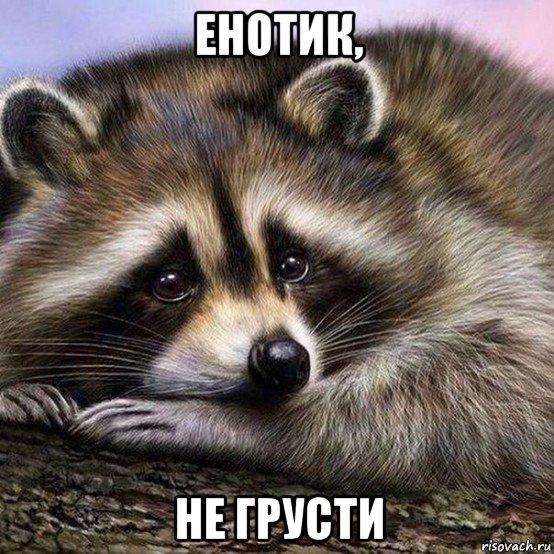 enot_123750670_orig_.jpg