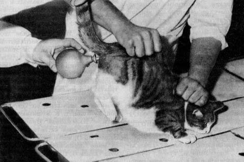 Как и чем делать клизму коту в