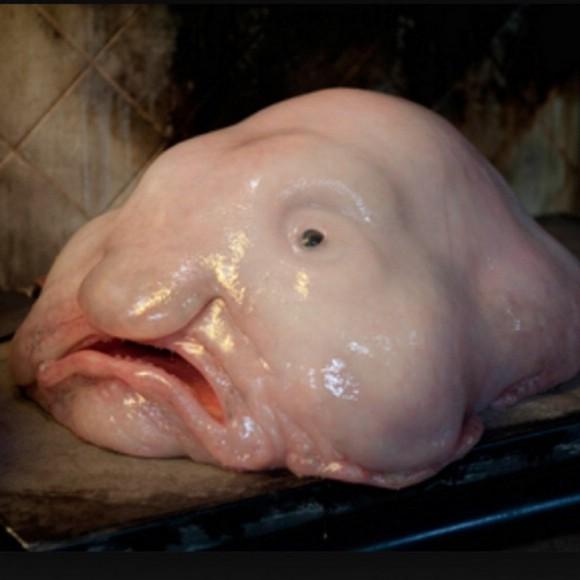 Ugly looking fish