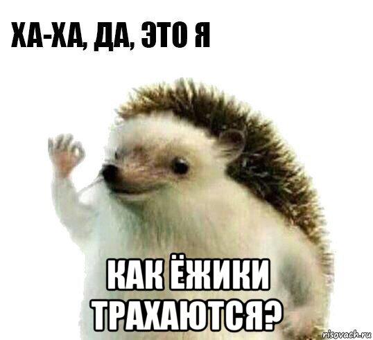Амиго а ёжики ебутся14