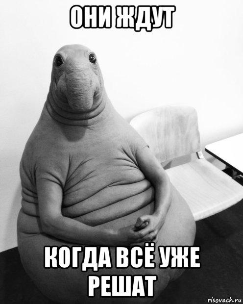zhdun_136826716_orig_.jpg