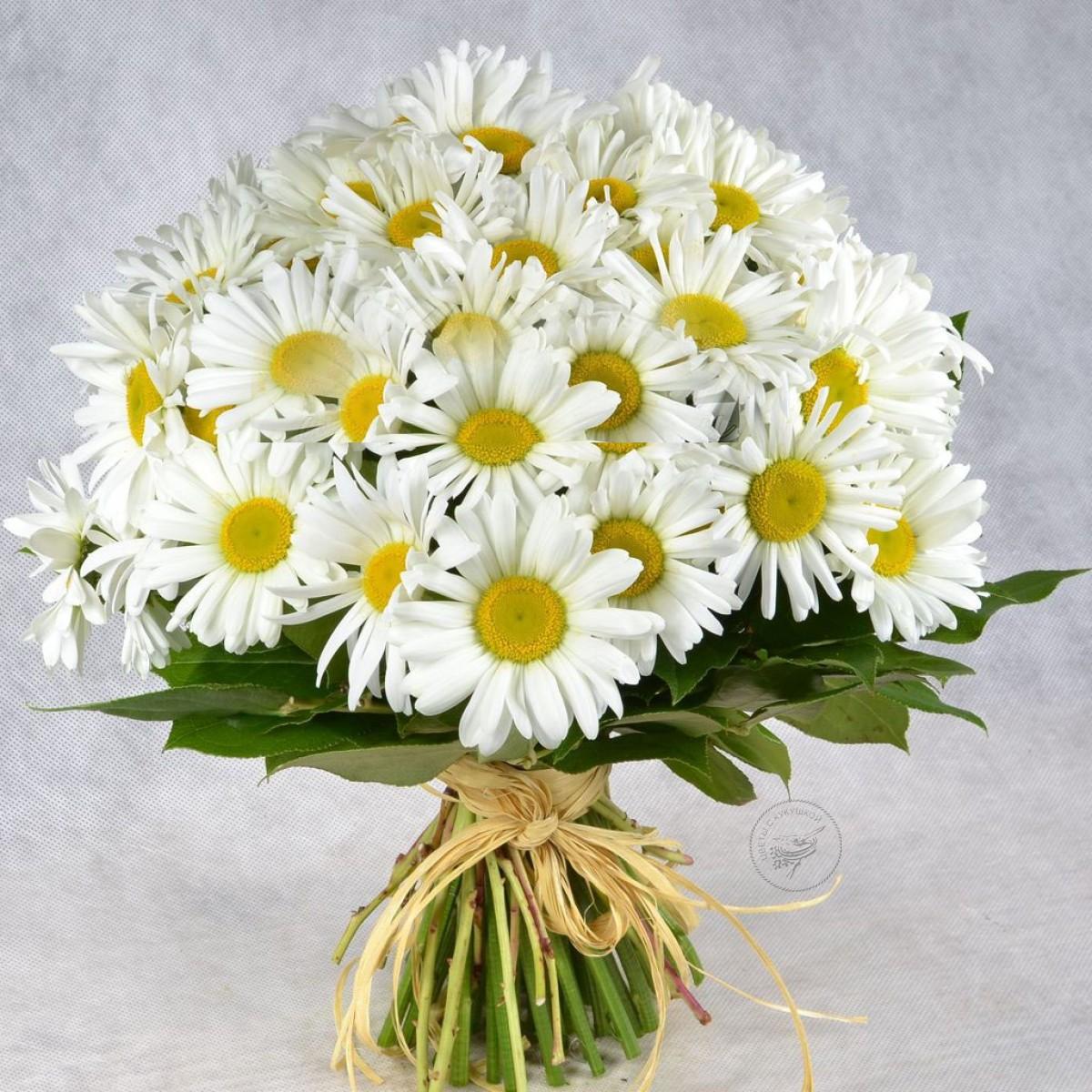 Цветы ромашка букет фото