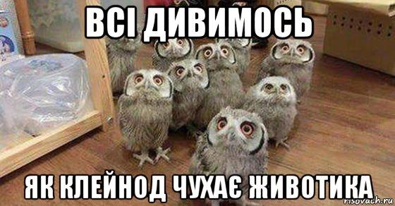 shmcshpshri_163268253_orig_.jpg