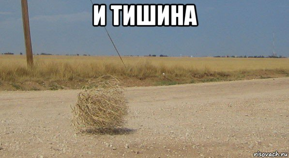 perekati-pole-odinochestvo_178139510_ori