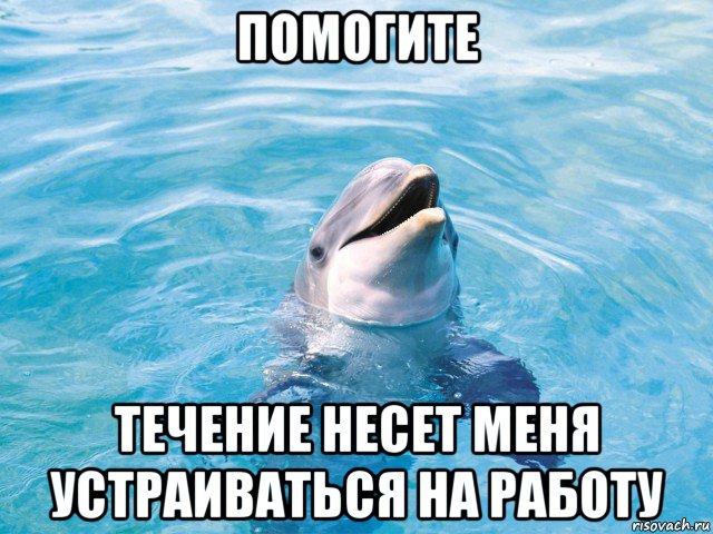 Сонник дельфин в прозрачной воде приснилось, к чему снится во сне дельфин в прозрачной воде?