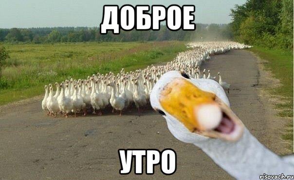http://risovach.ru/upload/2013/06/mem/gusi_22191620_orig_.jpg