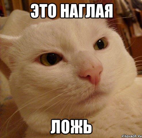 derzkij-kote_25122841_orig_.jpg