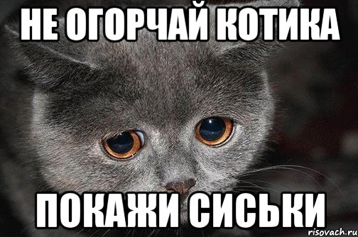 не огорчай котика покажи сиськи, Мем Грустный кот - Рисовач .Ру