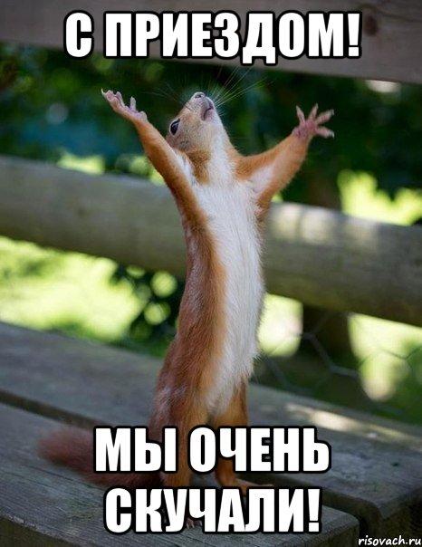 http://risovach.ru/upload/2014/09/mem/belka_61368466_orig_.jpg