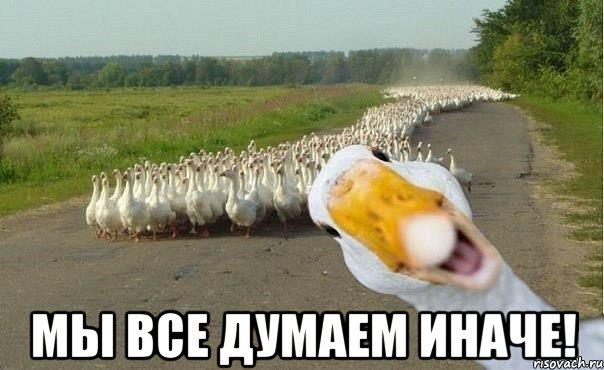 http://risovach.ru/upload/2014/10/mem/gusi_64077433_orig_.jpg