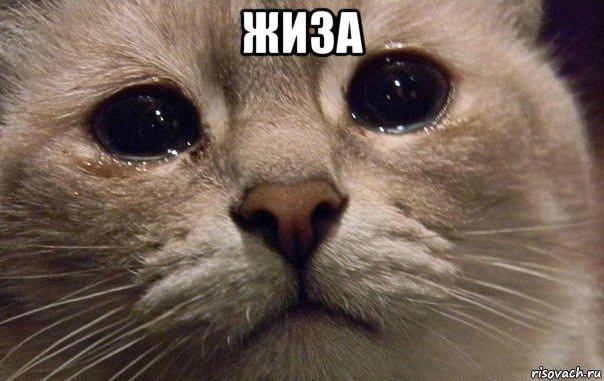 жиза , Мем В мире грустит один котик - Рисовач .Ру
