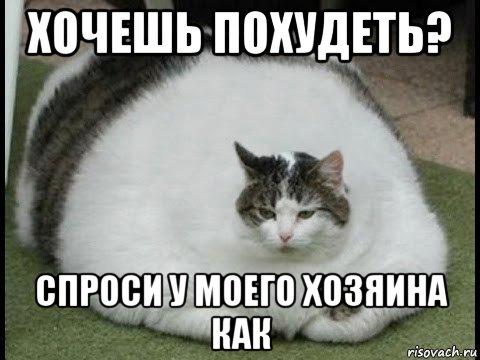 Кот Хочешь Похудеть. Как коту похудеть: простые и действенные методы, диета, питание и уход